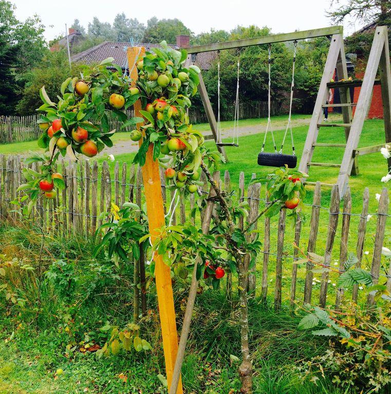 Apfelbaum - Spielgerüst im Garten vor dem Haus