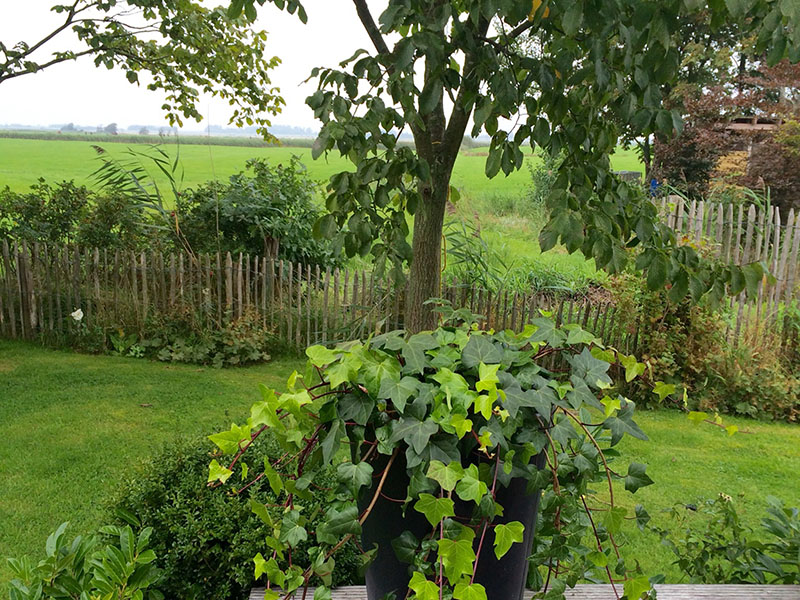 Terrasse mit Blick auf's Feld